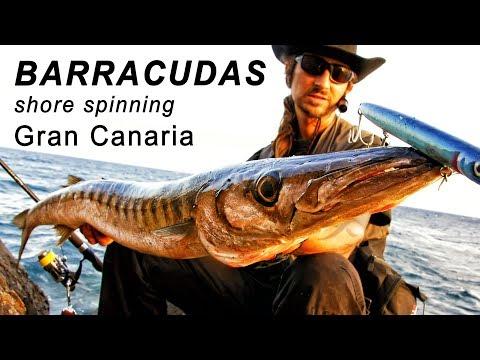 Barracuda på Gran Canaria