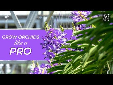 , title : 'Grow Orchids Like A Pro
