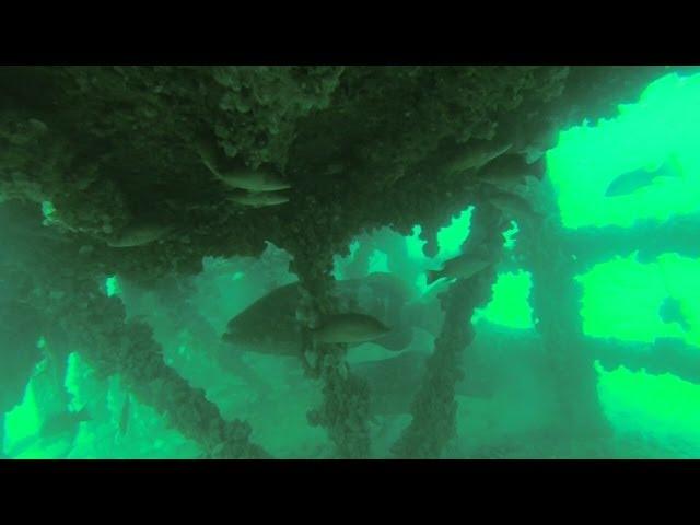 Diving Sarasota; MD-1 Artificial Reef