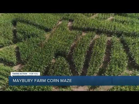 Maybury Farm Corn Maze