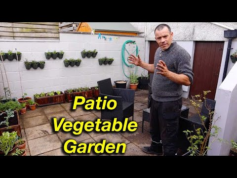 , title : 'Growing Patio Vegetables QUICK and EASY!
