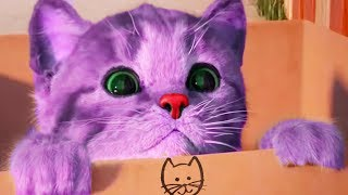 Play Little Kitten My Favorite Cat Pet Care Game - Fun Baby Kitten Animation Mini Games For Children