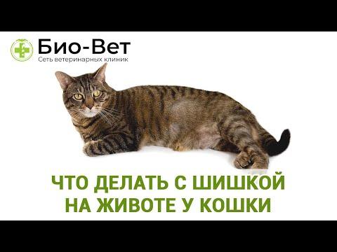 Шишка У Кошки На Животе 🙀// Что Делать? // Сеть Ветклиник Био-Вет