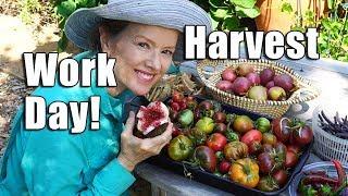 HUGE Urban Garden Workday   Harvest   Los Angeles