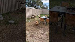 animales perros cómicos