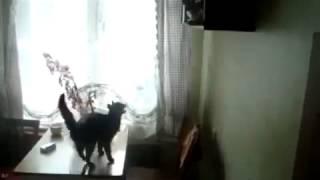 Передумал прыгать в последний момент / Cat decided not to jump
