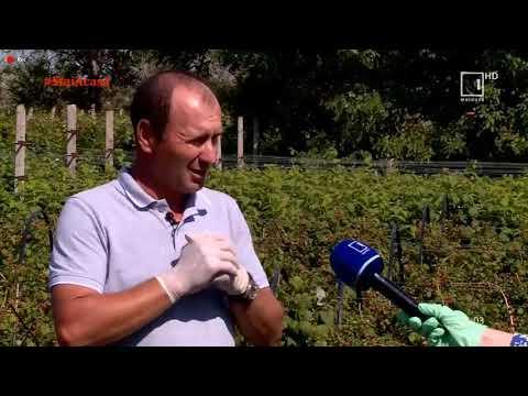 De ce sunt verucile plantare periculoase