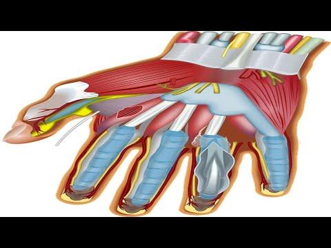 Ból w stawach stóp przed infekcjami