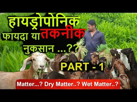 Ashwin Sawant | Dry matter..? Wet matter..? Does it really matter ..? In fodder/Hydroponic, Part - 1