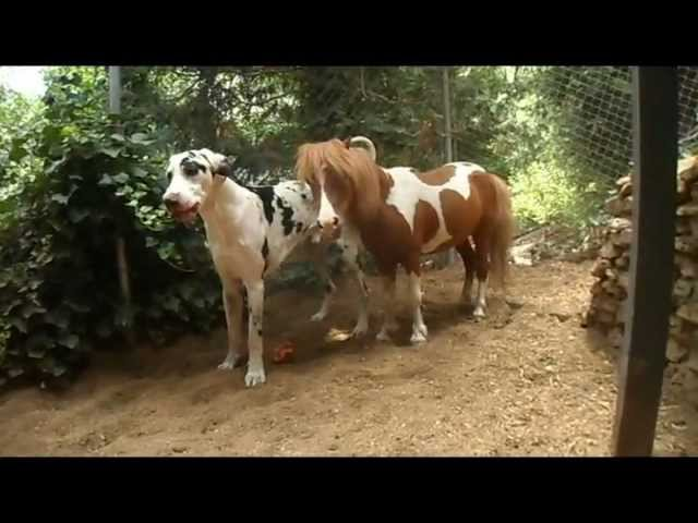 Playing-games-mini-horse