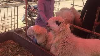 mundra chatra farm in lahore - ฟรีวิดีโอออนไลน์ - ดูทีวี