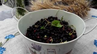 Пряный соус из черной смородины