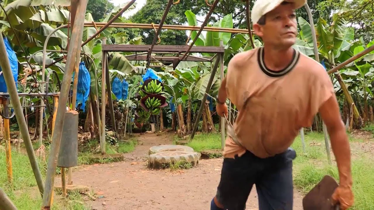 Costa Rica: Bananen (0:34)