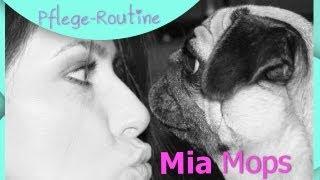 Mia Mops Pflege Routine