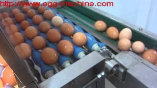 Egg Processing Line - Egg Washing, Egg Drying, Egg Candling, Egg Breaking