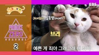 고양이를 부탁해 - 프로듀스 제로 20마리 유기묘 입양 프로젝트_#002