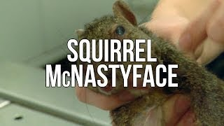 Squirrel McNastyface