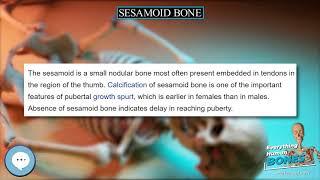 Sesamoid bone 🦴 Everything Human Anatomy Bones 🦴