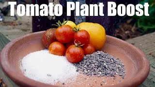 Tomato Fertilizing Tips - Organic End of Season  Boost - Easy & Cheap