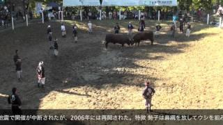 大人の新潟観光小千谷の闘牛
