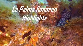 Tauchen La Palma
