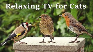 Calming TV for Cats : Cat TV - My Garden Birds - Relaxing Nature Music for Cats to Sleep