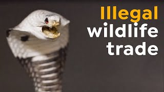 Airport Seizure | Illegal Wildlife Trade