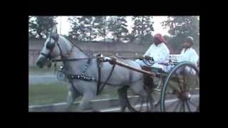 Tanga Horse Race In Delhi 2013 (bholu Pehlwan Horse VS Khalifa Rame)
