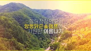 [맑은숲캠프] 홍보영상
