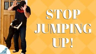 How To Train Your Dog To Stop Jumping On Guests - Professional Dog Training Tips
