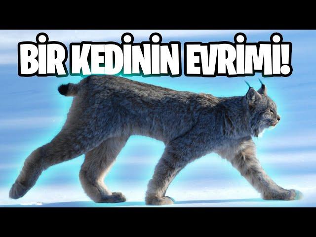 Türk'de Vaşak Video Telaffuz