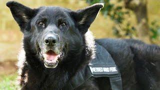 Febe the military dog gets hero's goodbye