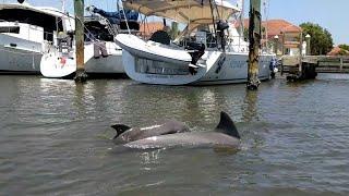 Плаваем на каяках с дельфинами в США / Florida dolphin watching and kayak tours