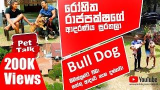 රෝහිත රාජපක්ෂගේ ආදරණිය සුරතලා | Bulldog | Pet Talk