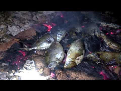 Video Ikan Kola Bakar di pulau Kaledupa, Wakatobi