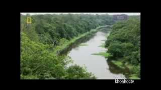 NHỮNG LOÀI ĐỘNG VẬT NGUY HIỂM NHẤT AMAZON ( PHẦN III )