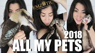 ALL OF MY PETS IN ONE VIDEO 2018   EMZOTIC