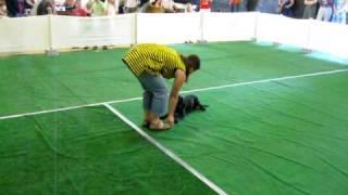preview picture of video 'Eva und Mia beim Dog Dance'