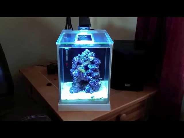 How to setup a Pico Reef Tank, Fluval SPEC 3, New LED light, blue tuxedo urchin
