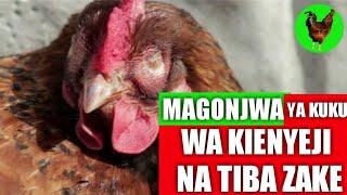 Magonjwa Ya Kuku Wa Kienyeji Na Tiba Zake