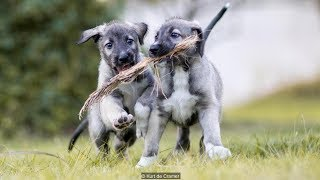 Twin Puppies Are The First Of Their Kind, And We Can't Get Enough Of Them