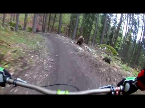 Велогонщики встретили в лесу медведя