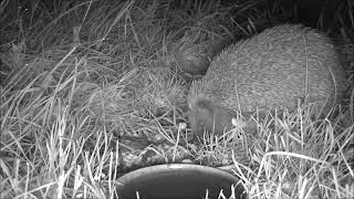 Wildlife Trail Camera - 11.5.2019