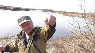 Где поймать карася в ярославской области