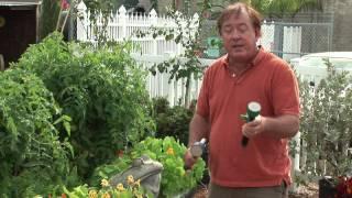 Maintaining a Garden : How to Water a Vegetable Garden