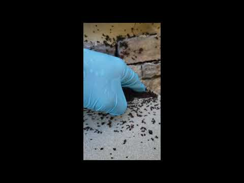 Store Bought Pest Products Worsens Infestation in Toms River, NJ