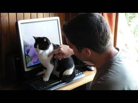 Best Care Cat Guide - How to Communicate with Cats