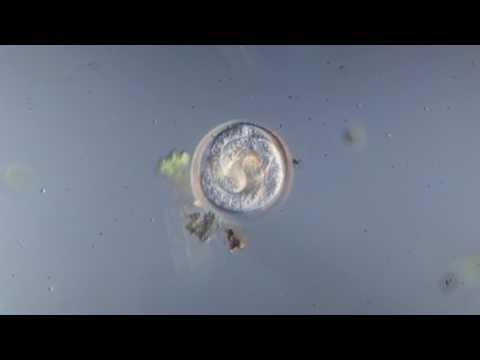 Как вывести паразитов из организма полынью отзывы