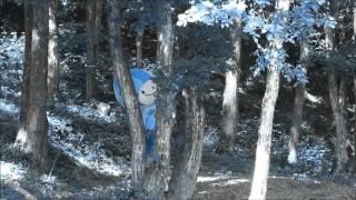 ミナモ in wonder forest.
