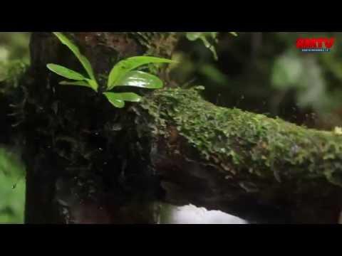 Curug Ciwalen, Keindahan Tersembunyi di Gunung Pangrango
